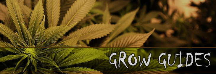 marijuana grow guides