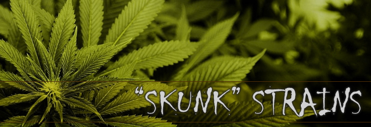 skunk marijuana seeds